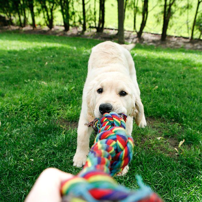 dog-with-chew-toy